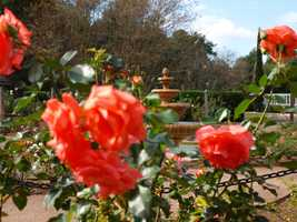 3. The Private Gardens of Historic OrlandoWhen: Sunday 12 - 5 p.m.Where: Handy Pantry, 522 E. Amelia St., Orlando, Fla. 32803Cost: Adults $15, Free for children 12 and under. Purchase tickets here.Guests have the opportunity to explore some of the hidden places throughout Orlando. Guests will also be able to experience live music, art, and plant vendors at Garden Central (Handy Pantry). The tour is self-guided and begins at noon.