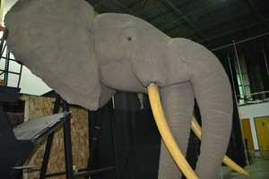 Two-headed elephant