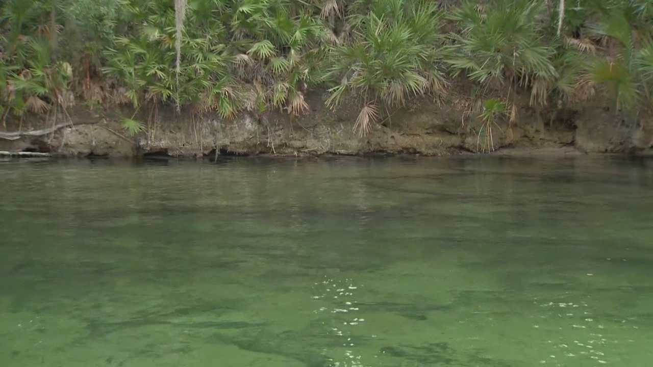 The body of a missing diver was found Monday evening at Blue Spring State Park in Orange City, according to the Volusia County Sheriff's Office.