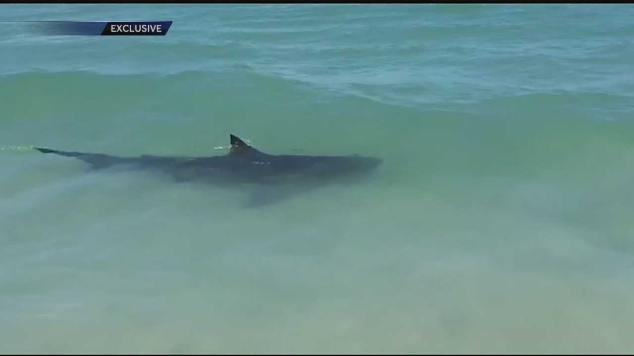Several shark sightings shut down all beaches in St. Lucie County Monday. Whitney Burbank reports.