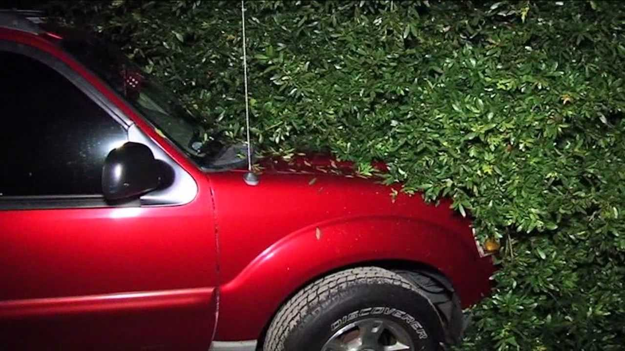 Severe weather knocked a tree onto a house in Apopka on Thursday evening, damaging two cars in the process.