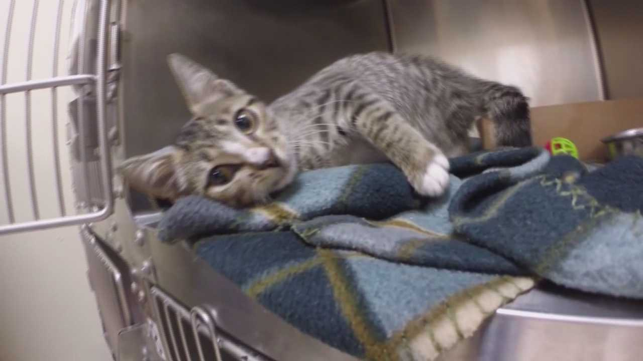 Three little kittens are recovering from acid burns that appear to be intentional. Dan Billow (@DanBillowWESH) has the story.