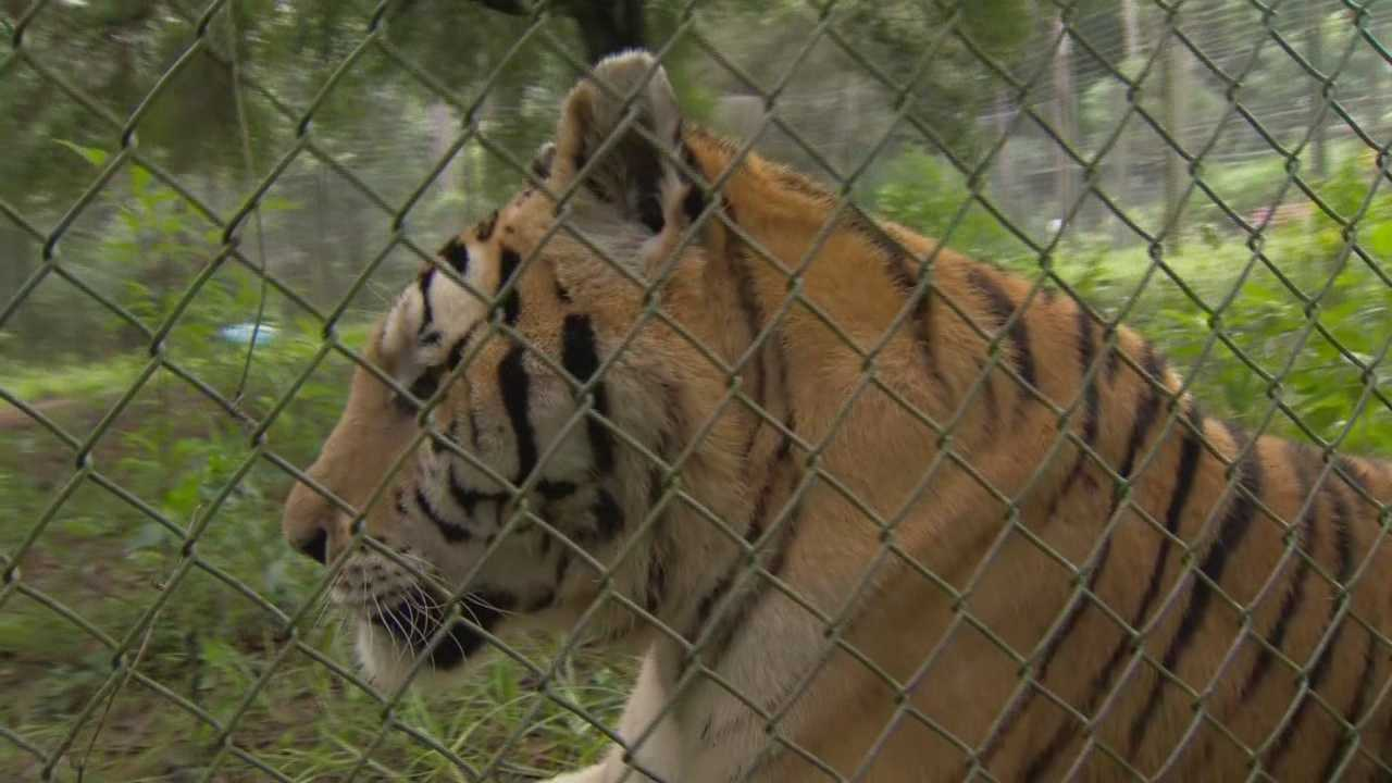 A local woman who is permitted to take care of many exotic animals by the state of Florida, said a priority of hers is certainly taking care of those animals. Her other priority? Making sure her neighbors stay safe. Dave McDaniel (@WESHMcDaniel) has the story.