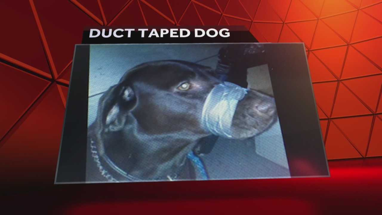 Police in North Carolina have charged a woman with taping a dog's muzzle shut and posting the photograph on Facebook, according to police in Cary, North Carolina. Meredith McDonough reports.