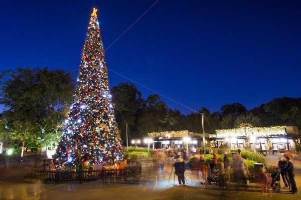 Christmas Tree at Disney's Animal Kingdom