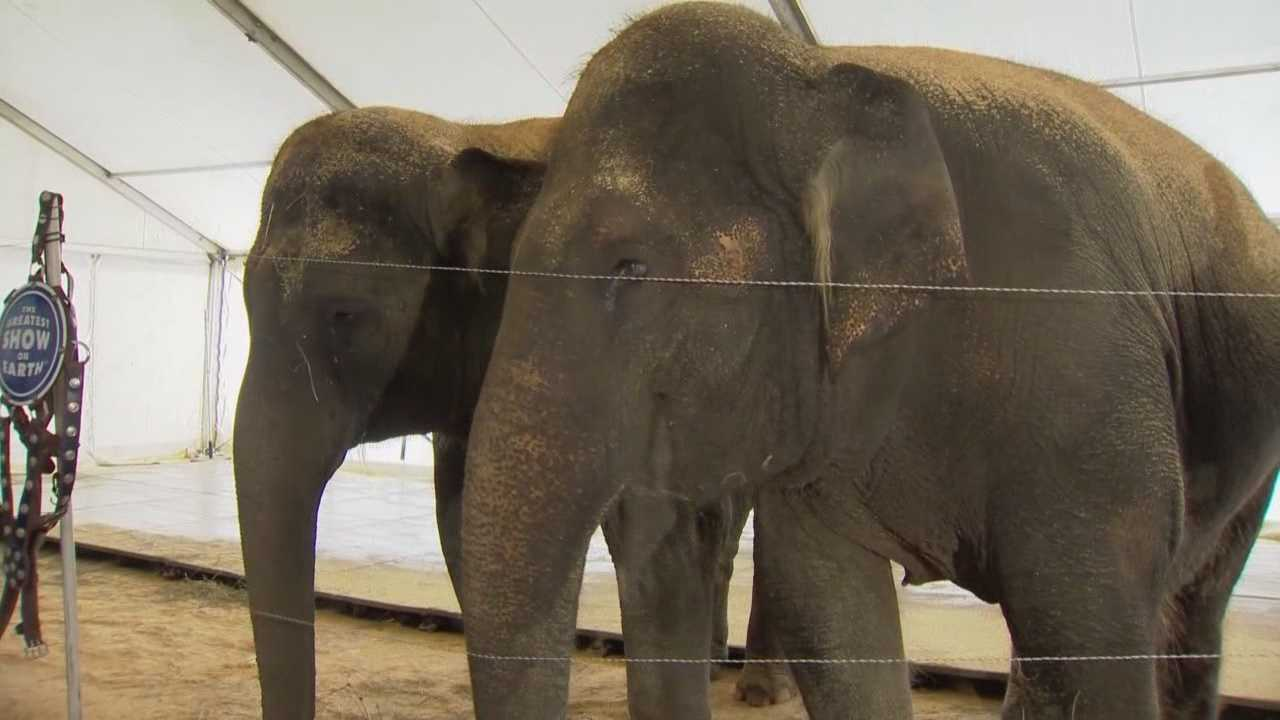 It's one of your last chances to see Asian elephants at the circus. The elephants will be retiring from Ringling Bros. and Barnum & Bailey Circus in May and sent to live on a preservation. Matt Grant (@MattGrantWESH) talked with the circus about the move.
