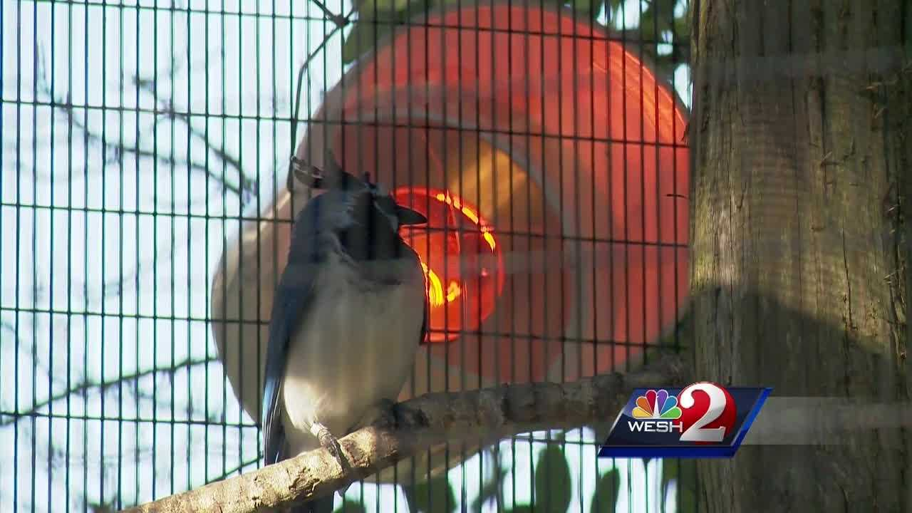 The Central Florida Zoo has a large collection of animals to protect when the weather gets cold. Alex Villarreal takes a look at the special steps zoo keepers must take.