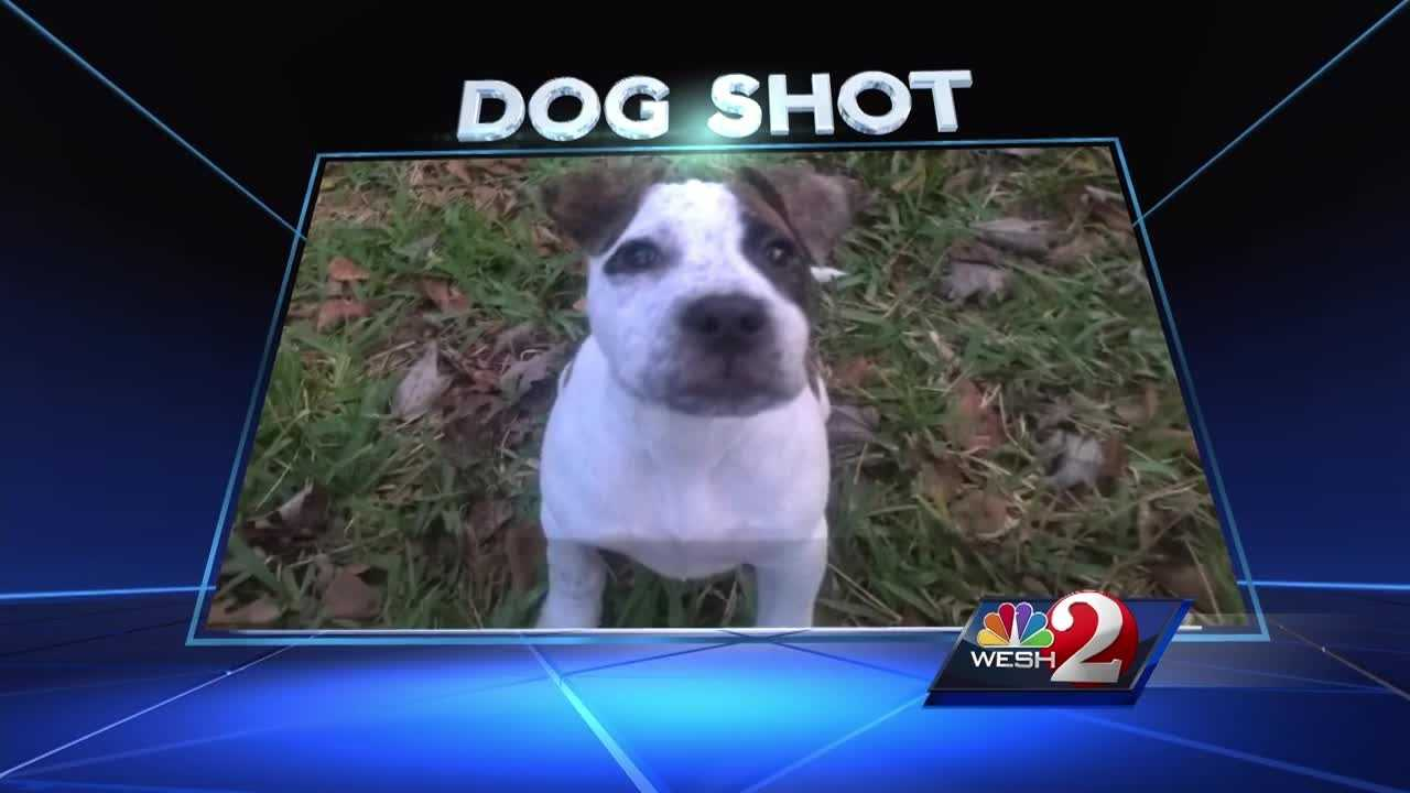 A gruesome photo circulates in a local community of what appears to be a dog's body, riddled with bullets. WESH 2 News tracked down the Palm Coast family who says the puppy was theirs. Chris Hush reports.