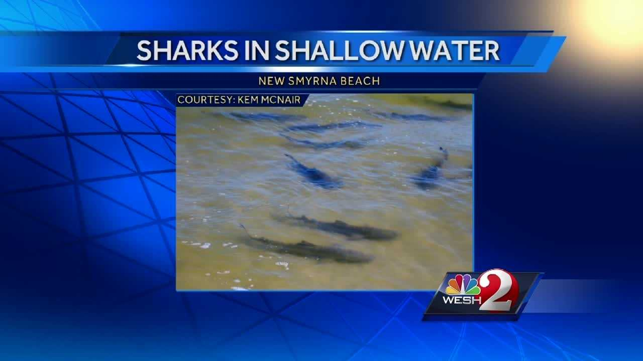 Spring breakers are not the only group flocking to Central Florida this week. Thousands of sharks are migrating right off the coast of many Central Florida beaches.