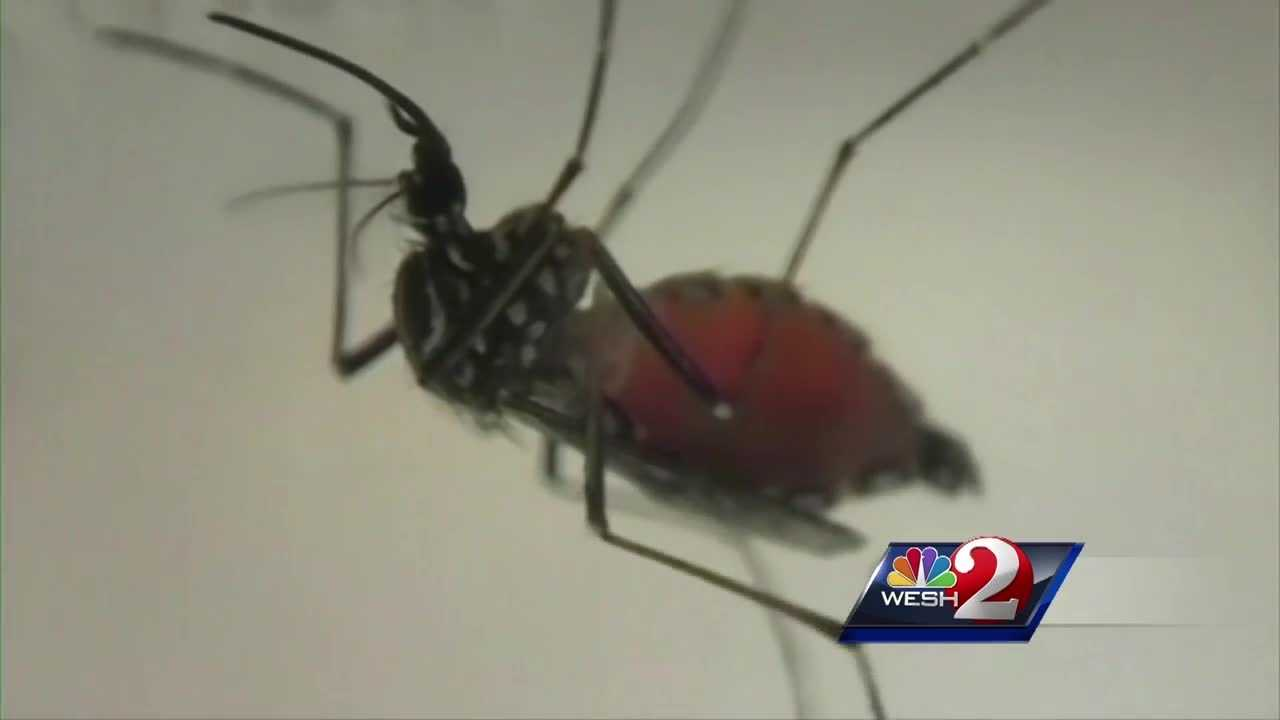 A new case of the Zika virus has been reported in Orange County. It comes as Puerto Rico announced that it has suffered its first death from the Zika virus. Chris Hush (@ChrisHushWESH) speaks to a local physician about what precautions to take.