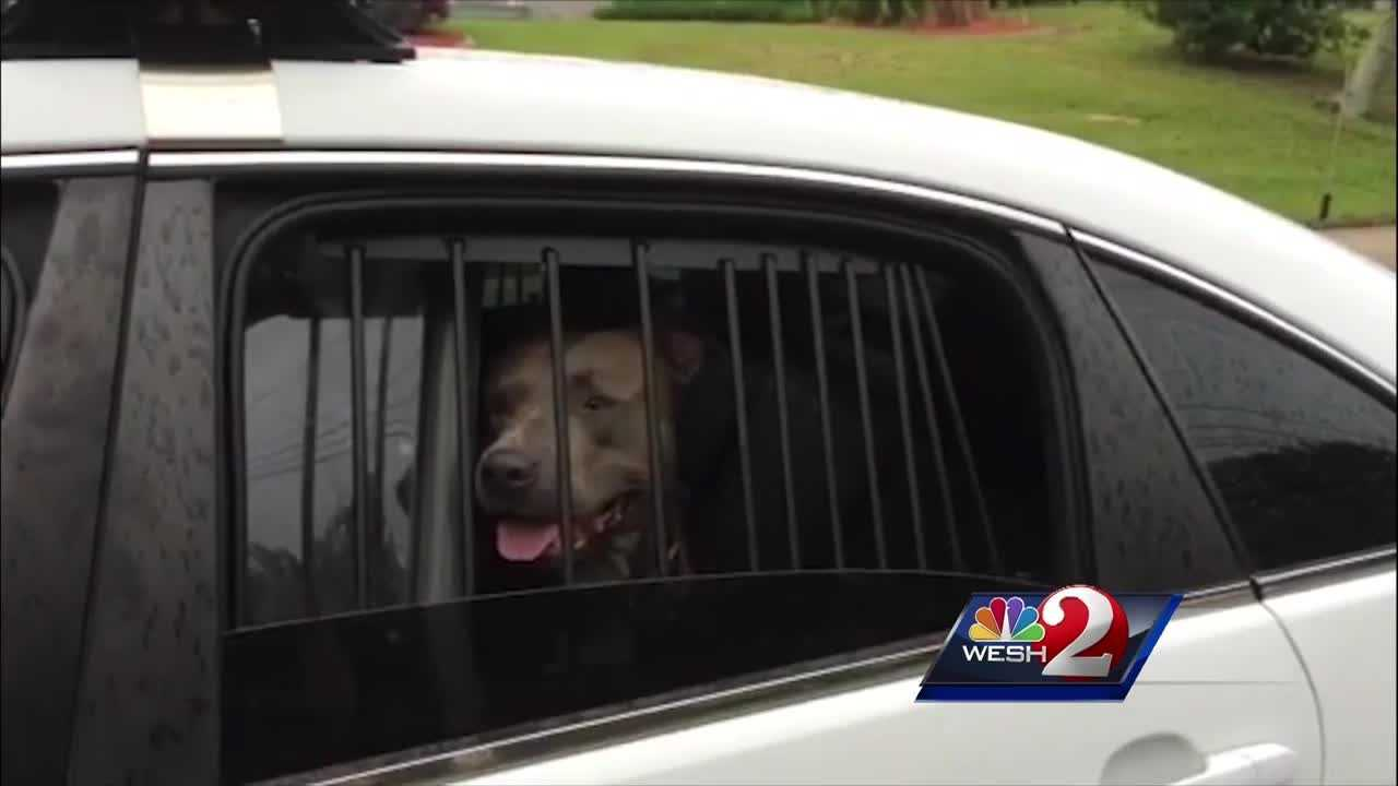 Animal control investigators are looking into a dog attack in Daytona Beach. A pit bull is now in quarantine after attacking two other dogs and killing one of them.