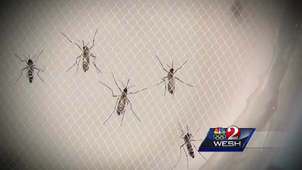 With a big rainmaker moving over Central Florida and more rain in the forecast afterward, officials want residents to be mindful of mosquitoes, since they thrive in stagnant water. Matt Lupoli reports.