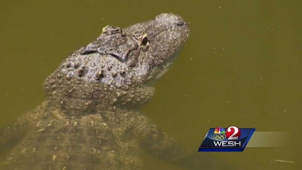Be cautious of gators when swimming in lakes, expert says