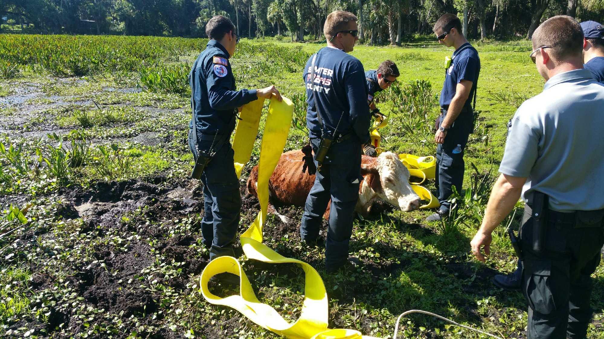 Large Animal Rescue 1.jpg