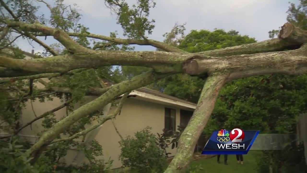 A storm packing winds in excess of 40 mph knocked down trees and left more than 100 people without power Saturday night.
