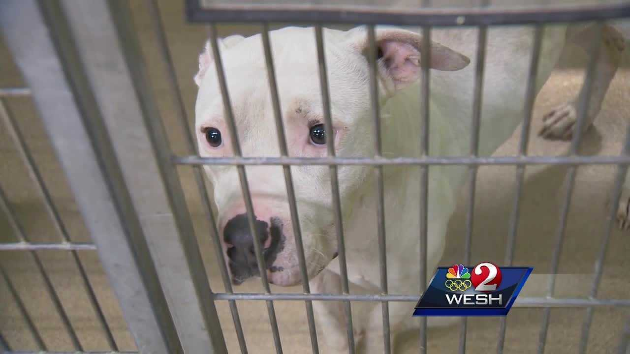 Orange County is taking action to improve the conditions at the Orange County Animal Services kennel. Amanda Ober (@AmandaOberWESH) reports.
