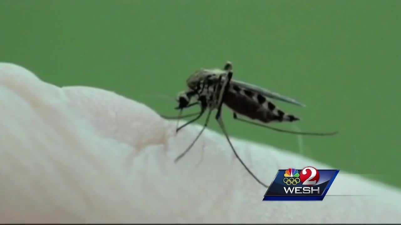 A second case of Zika in South Florida is being called into question because the person who contracted it hasn't traveled abroad, ramping up concerns mosquitoes here may be infected.