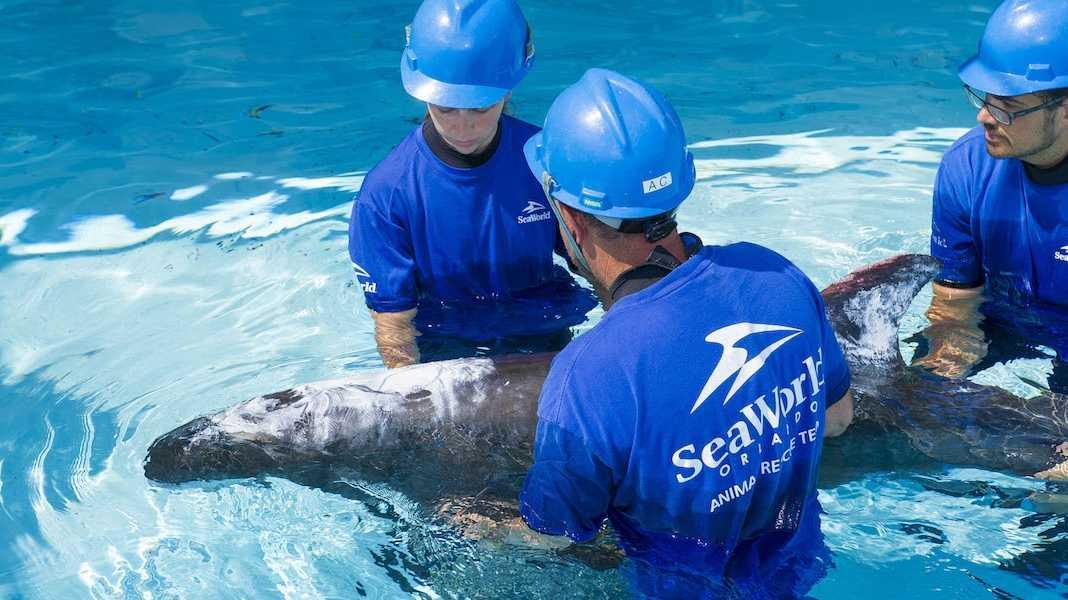 whale vie seaworls.jpg