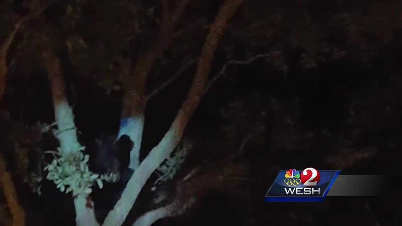 Bear trapped, taken to Ocala National Forest