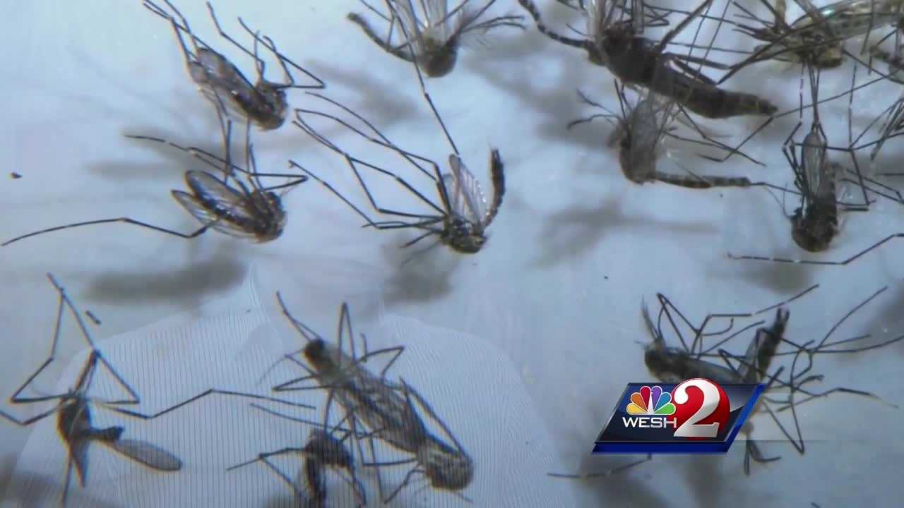 Florida has been the center of the Zika outbreak, and now, homegrown cases of the virus are creeping closer to Central Florida. WESH 2 News spoke with a doctor about what residents need to do to be prepared.