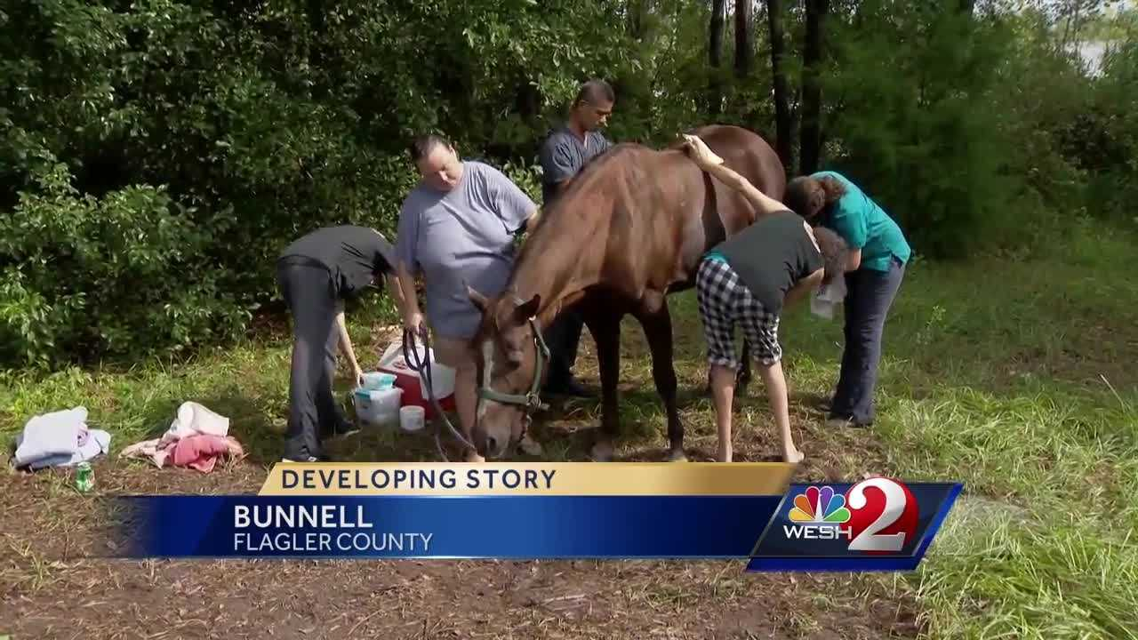 Horse, 'Mercy,' rescued from septic tank