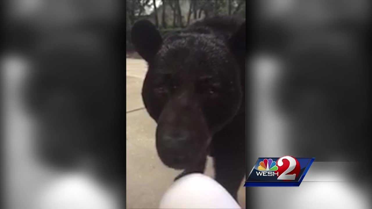 A Seminole County community has become one of the first in Florida to outfit residents with bear-proof trash cans.