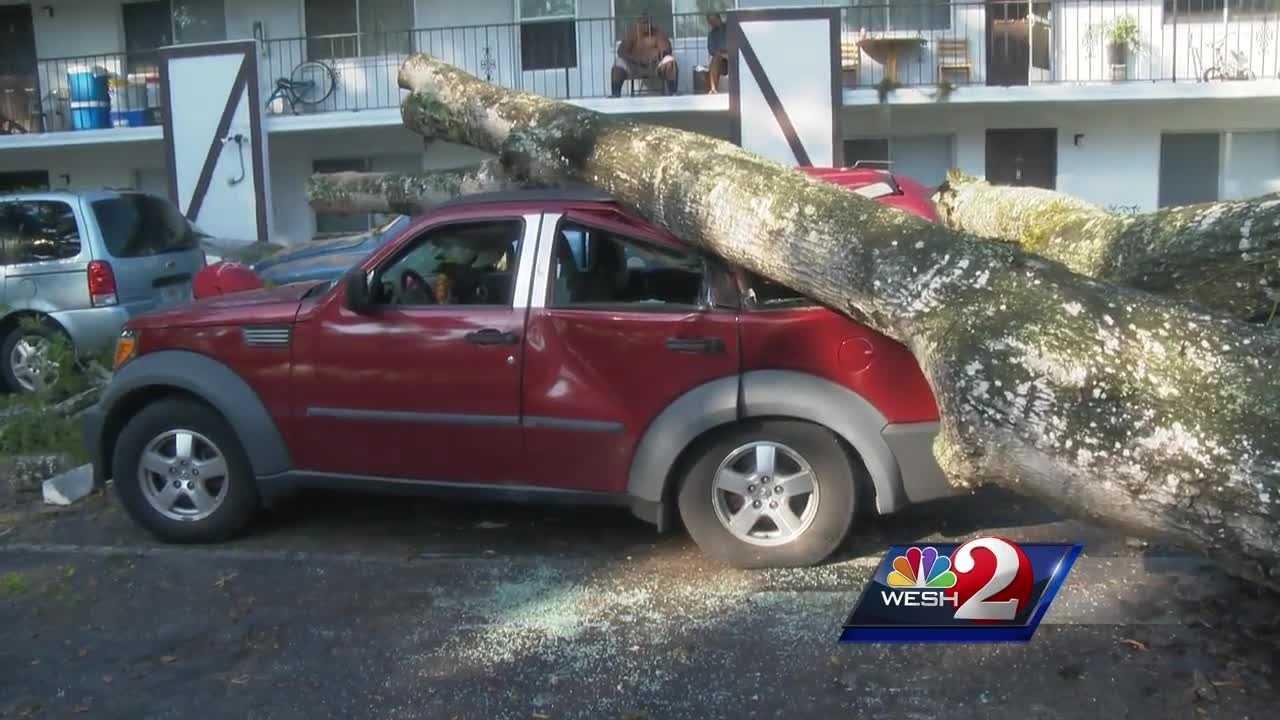 tree on car.jpg
