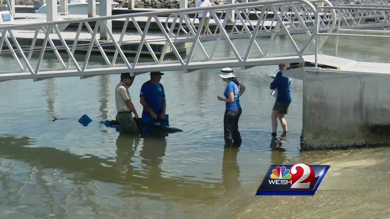 Bystanders and deputies tried to save a stranded whale at Port Canaveral Monday, but biologists concluded there was nothing they could do for the whale. Dan Billow reports.