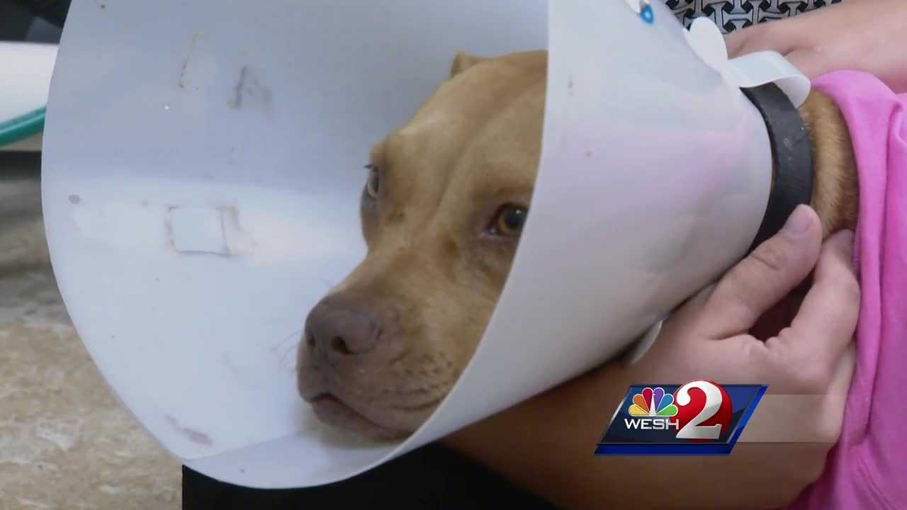 A horribly burned dog, doused with acid last week, is making a recovery and teaching some life lessons at a Titusville SPCA clinic. Dan Billow reports.
