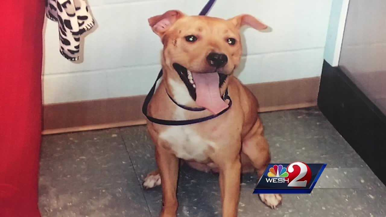 An Osceola County woman said a dog attacked her and her small dogs. Bob Kealing reports.
