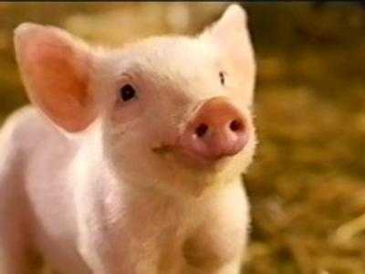 Charlotte's Web: This family-friendly story of a pig and spider befriending one another was mostly filmed in Australia, but there were a couple of scenes filmed in Bucks County.