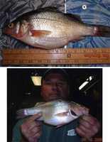 Perch, White (Morone americana): 1 lb. 12 oz. -- caught by James Clark of Philadelphia in 2008 at the Delaware River.