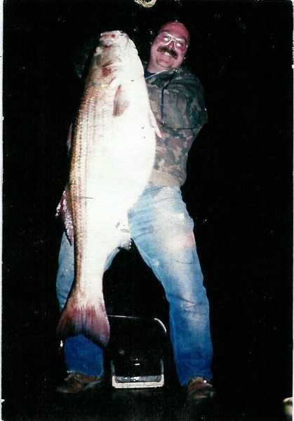 Bass, Striped - Marine (Morone saxatilis): 53 lb. 13 oz. -- caught by Donald J. Clark of Boothwyn in 1989 at the Delaware River.