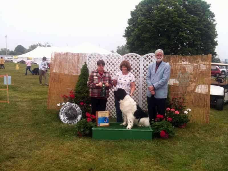 The Newfoundland Club of America's national dog show is being held in Cumberland County.