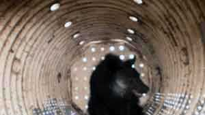 Upper Allen Township police provided this photo of the bear in the trap.