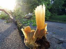 A downed tree along East Grenda Avenue in Derry Township.