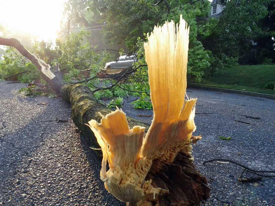 A downed tree alongEast Grenda Avenue in Derry Township.