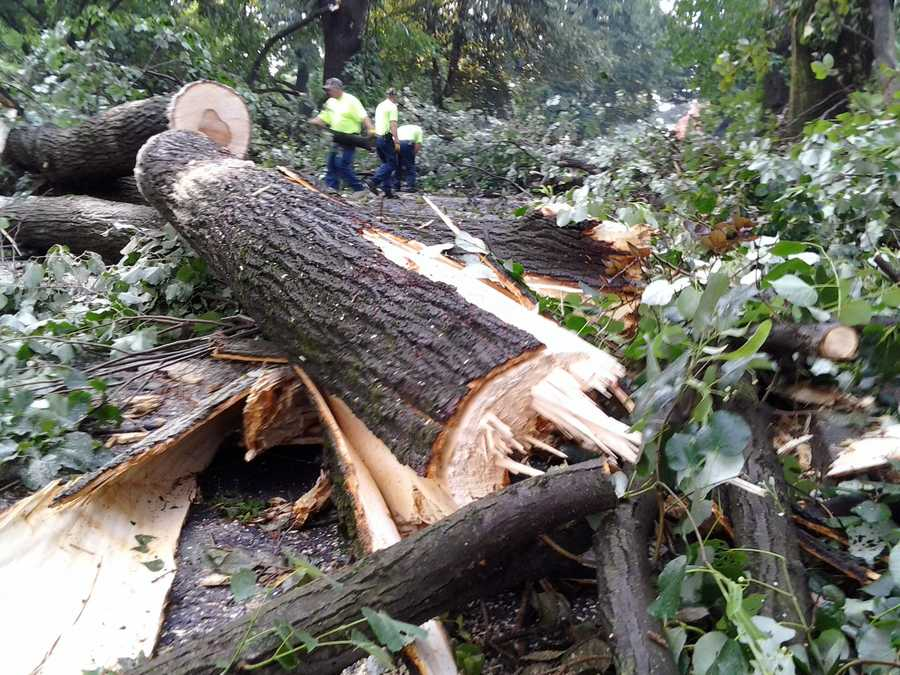 A downed tree alongPara Avenue in Derry Township.