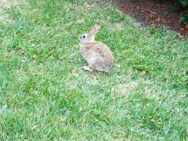 Wyoming: In Wyoming, it's illegal to take a picture of a rabbit from January to April without an official permit.