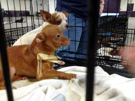The dogs' owners are expected to be charged with animal cruelty.
