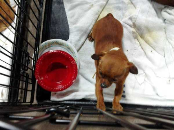 The dogs were initially taken to the farm show complex in Harrisburg to be medically evaluated.