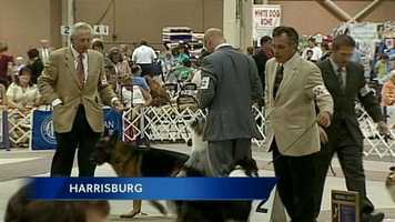 Dogs and their owners took over the Pennsylvania Farm Show Complex Saturday