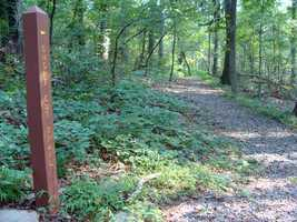 Use the Short Cut Trail, a short loop, to more fully explore the pine plantation.