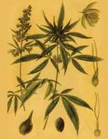 9. Some brain areas have many cannabinoid receptors&#x3B; others have few or none. The highest density of cannabinoid receptors are found in parts of the brain that influence pleasure, memory, thinking, concentrating, sensory and time perception, and coordinated movement.
