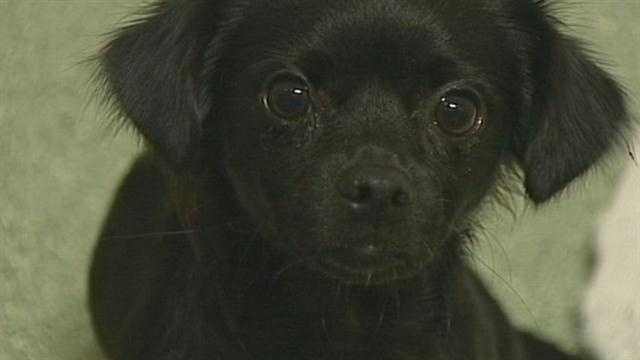 Fourteen dogs were rescued in Elizabethtown on Thursday. The dogs were brought to the boarding facility Playful Pups.