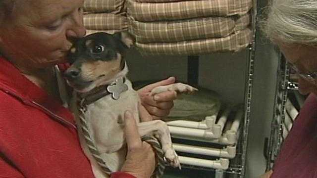 The founder of the group said the 14 dogs were handed over to them in bad shape from a breeding facility.