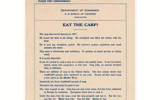 """And so in 1911, the Bureau of Fisheries distributed this flyer – """"Eat the Carp!"""" The flyer claims that carp is delicious and nutritious."""