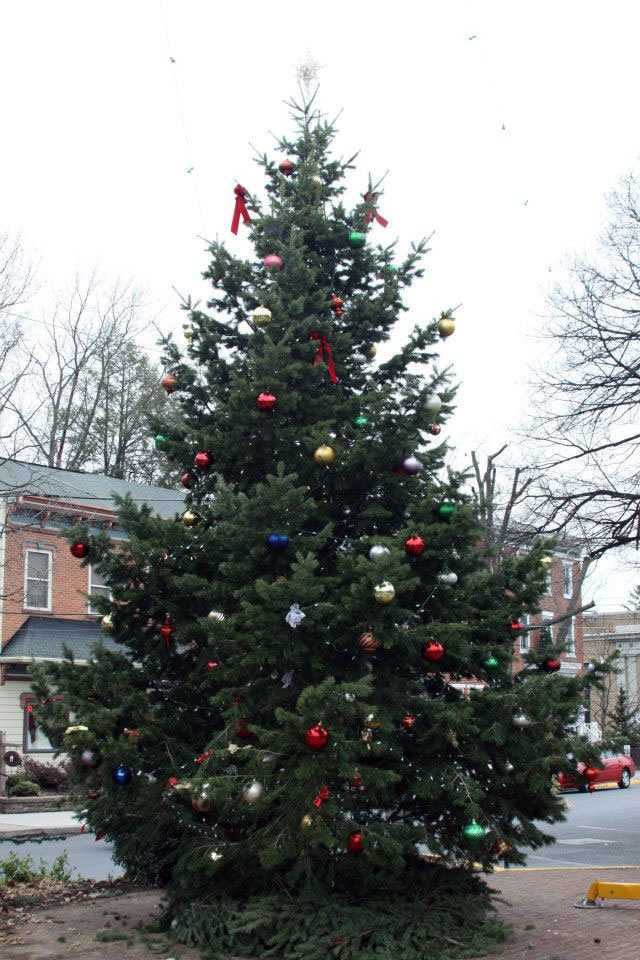 This is a photo of the tree the day it was put in place, a week before the tree lighting.