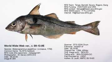 Haddock is what it sounds like -- Haddock. It's part of the Cod family.