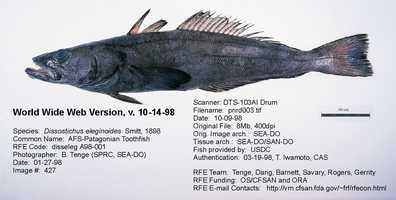 Chilean Sea Bass is actually something known as the Patagonian Toothfish. The real name isn't quite as appetizing.